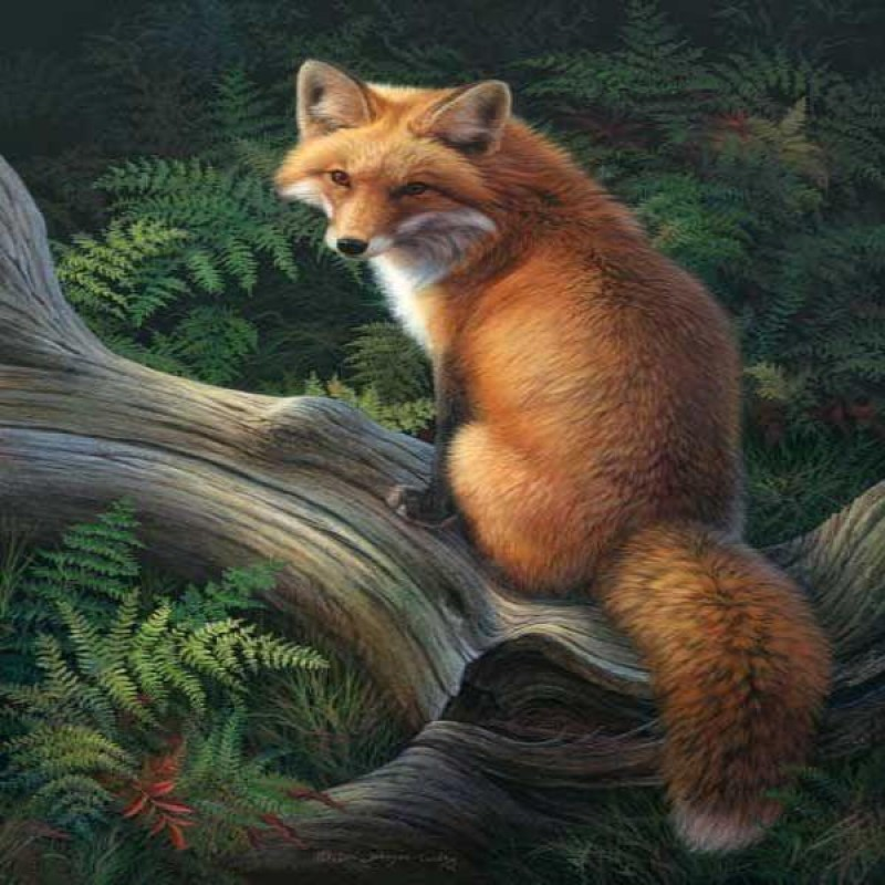 Forest Fox