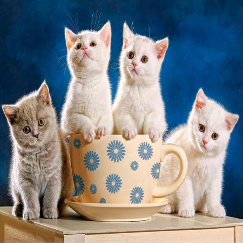 Cup Of Kittens