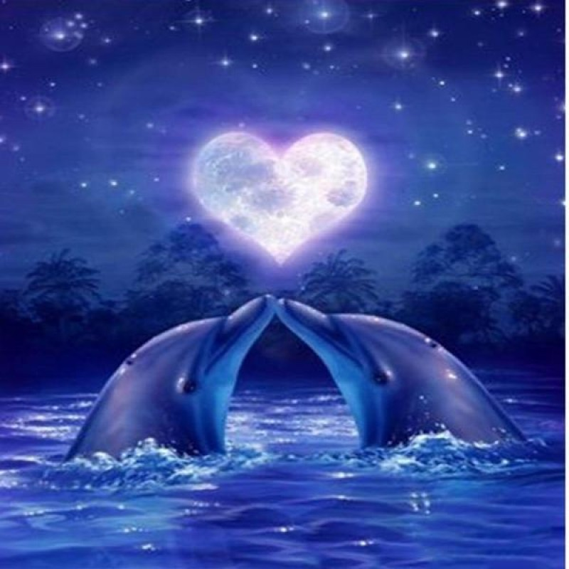 Love Dolphins