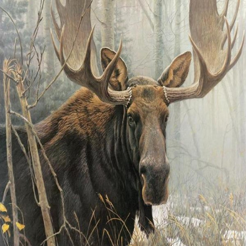 Foggy Forest Moose