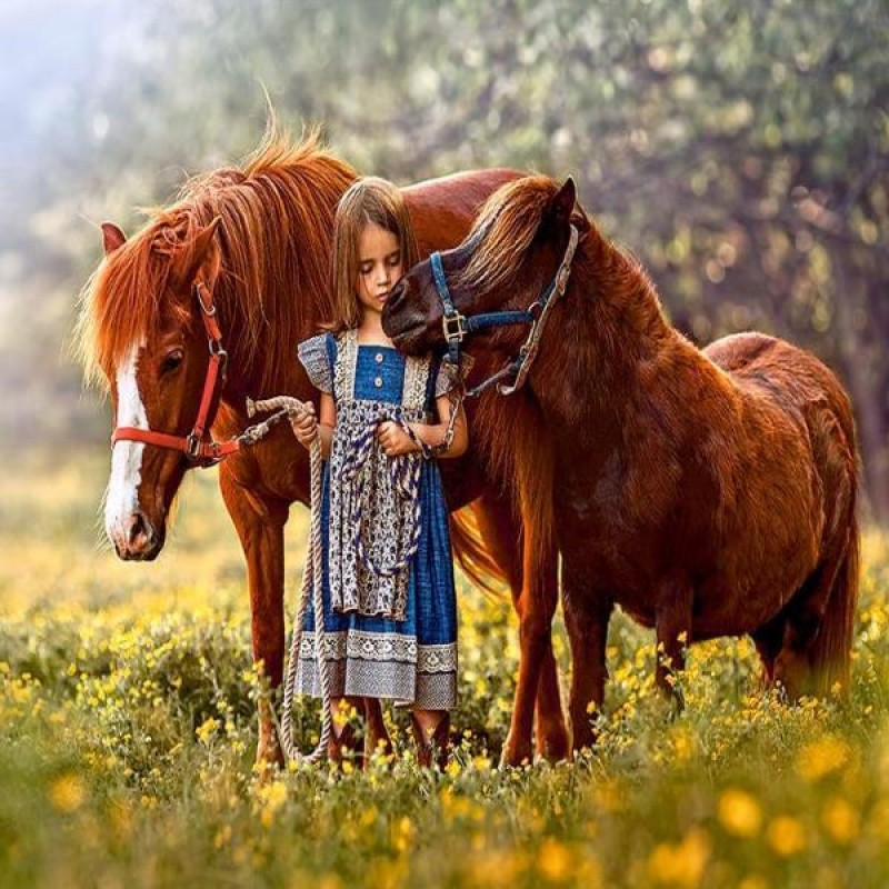 Girl And Her Ponies