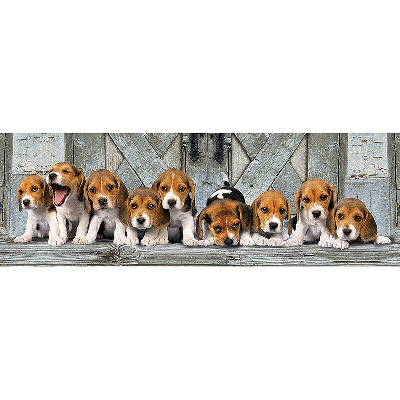Beagle Puppy Panoram...
