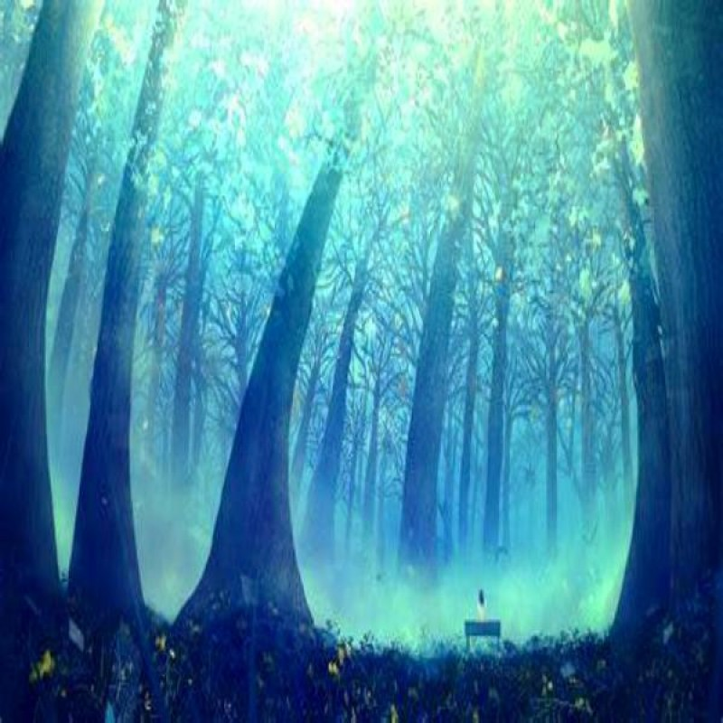 Fantasy Forest