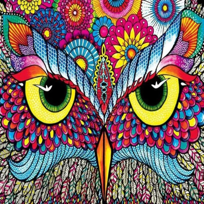 Colorful Owl Gaze