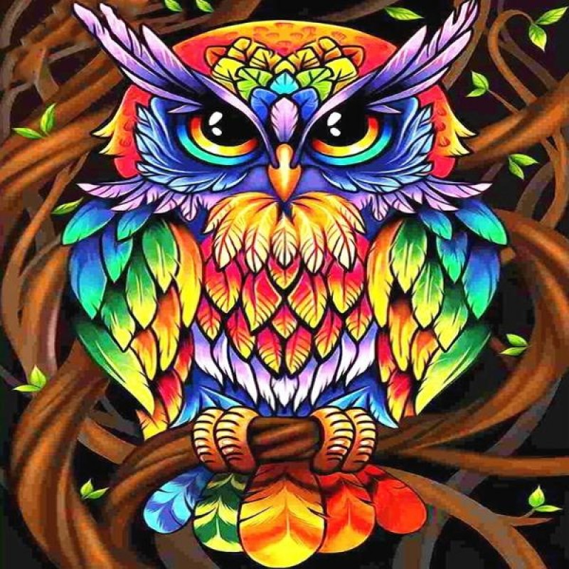 Rainbow Coat Owl