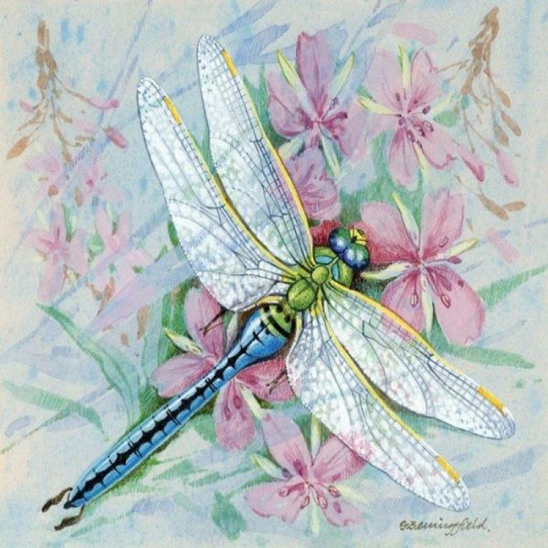 Pastel Dragonfly
