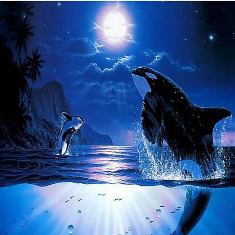 Moonlight Whales