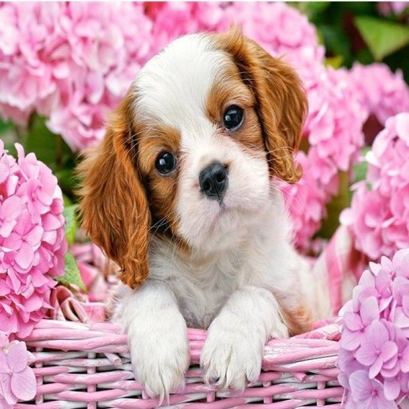 Puppy In Flower Bask...