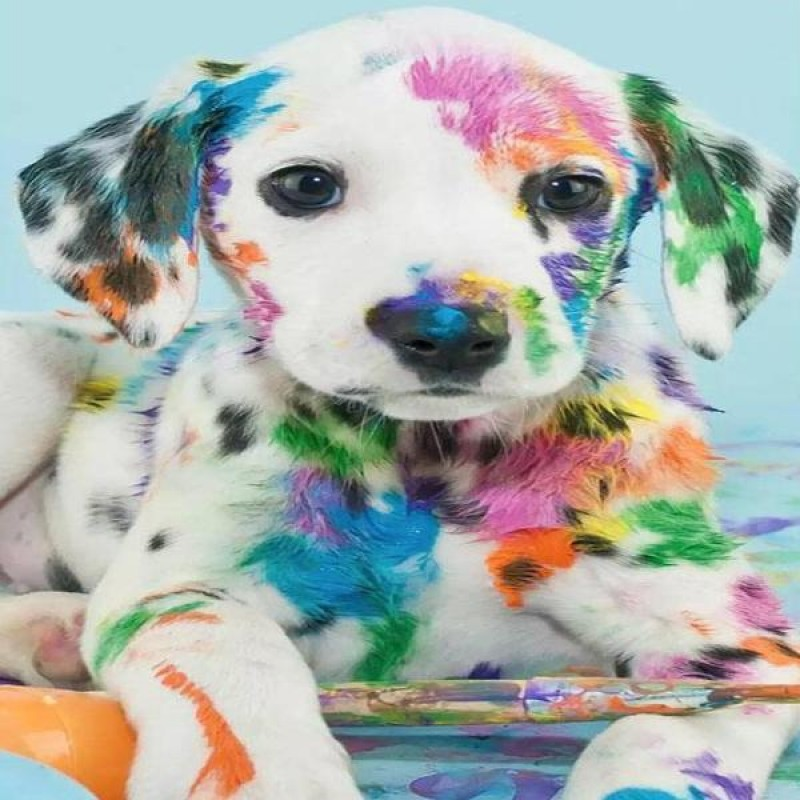 Color Spot Puppy