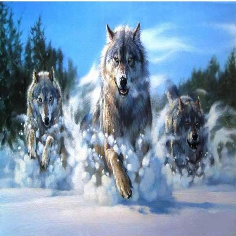 Hunting Wolf Pack