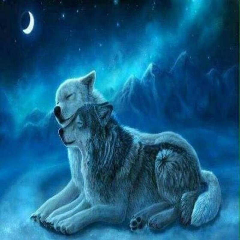 Frosty Night Wolves