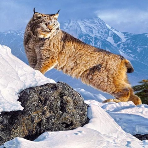 Lonely Mountain Lynx
