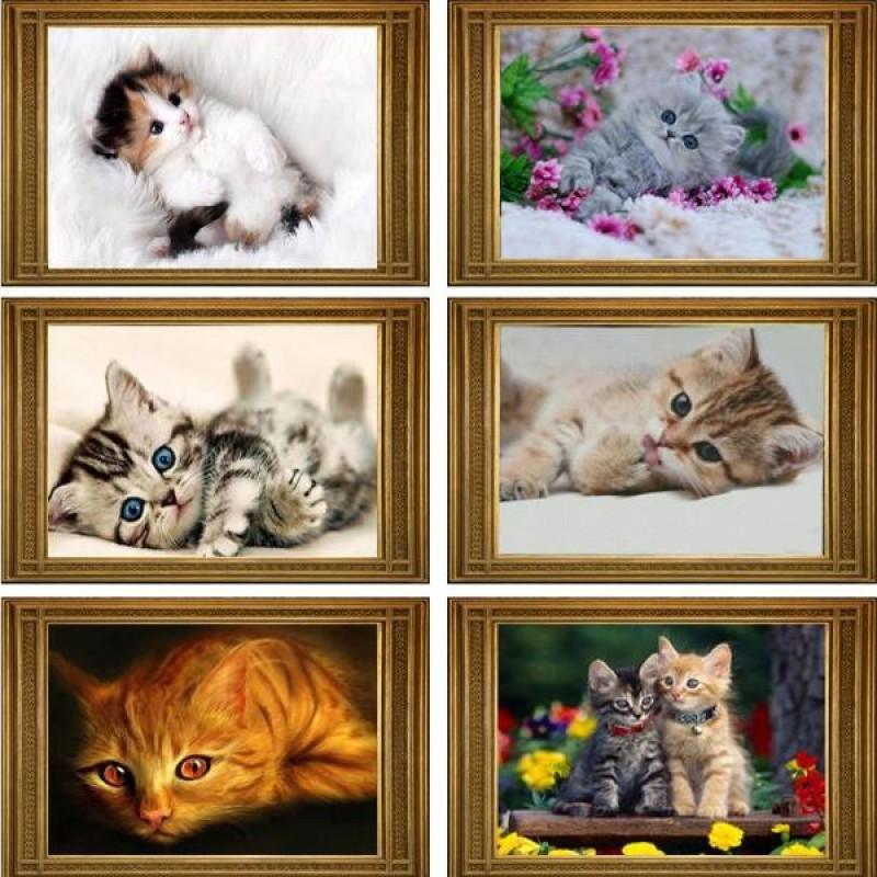 Cute Kittens Collect...
